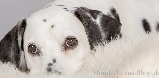 gerne bedienen wir auch Hundebesitzer mit Dalmatiner