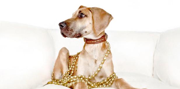 Dogge-neu