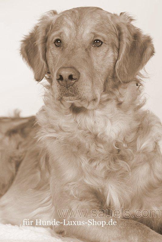 Opulentes und luxuriöses Zubehör unterstreicht die Schönheit von grossen Hunden.