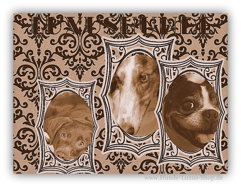 LUXUSHUNDE -  das ist fast jeder Hund der verwöhnt wird egal welcher Rasse er angehört - ob gross oder klein.