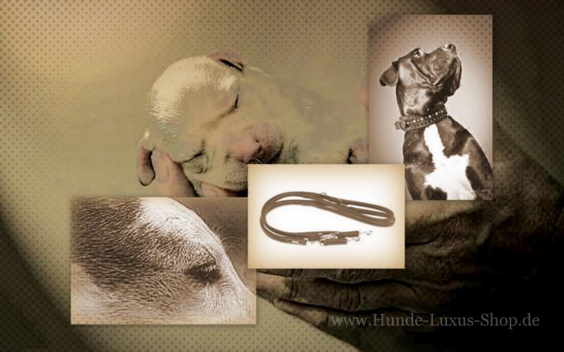 Leben mit Hund im Luxus. Besuchen Sie unseren Shop und finden Sie etwas für das Wohnen mit Hund.